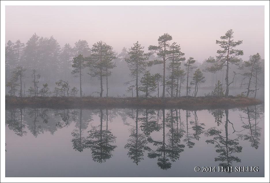 Nebelstimmung im Moor